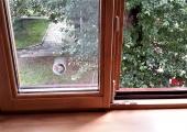 Окна стандартные (27)